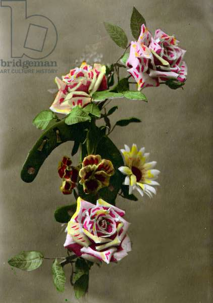 Horseshoe and flowers  c.1898 (hand-tinted photo)
