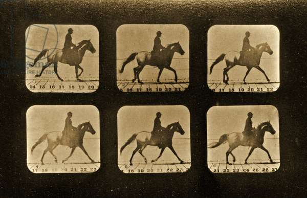 Horses. Irregular, 'Animal Locomotion' series, c.1881 (b/w photo)