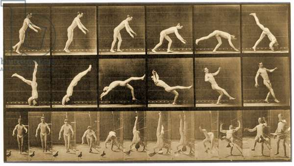 Plate from 'Animal Locomotion' series, c.1887 (b/w photo)