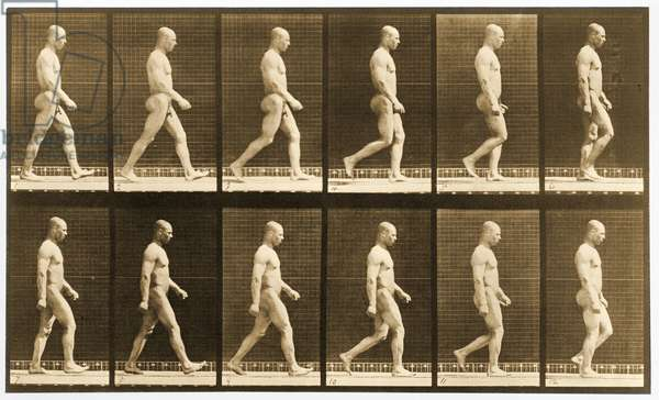 Image sequence of a nude man walking, 'Animal Locomotion' series, c.1881 (b/w photo)