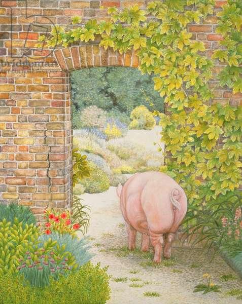 The Convent Garden Pig