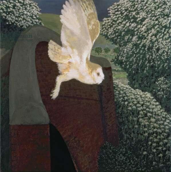 Barn Owl at Stanton Bridge, 1994-95