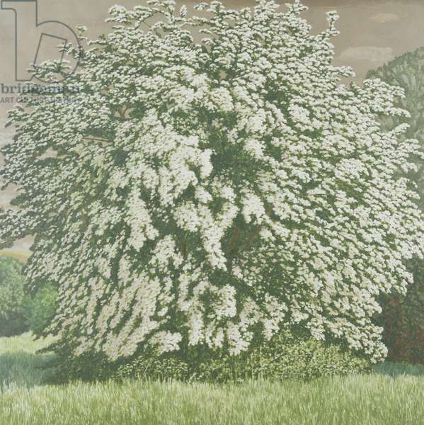 May Tree, 1998 (oil on canvas)