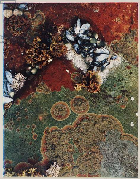 Marine Life (dye transfer print)