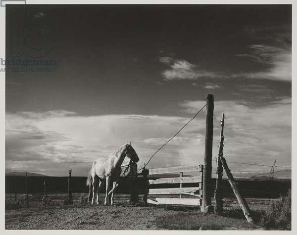 White Horse Ranchos de Taos, New Mexico, negative 1932, print 1976 (gelatin silver print)