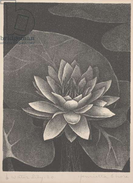 Water Lily (lithograph)