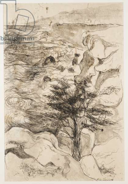San Clemente Tree, 1958 (charcoal on paper)