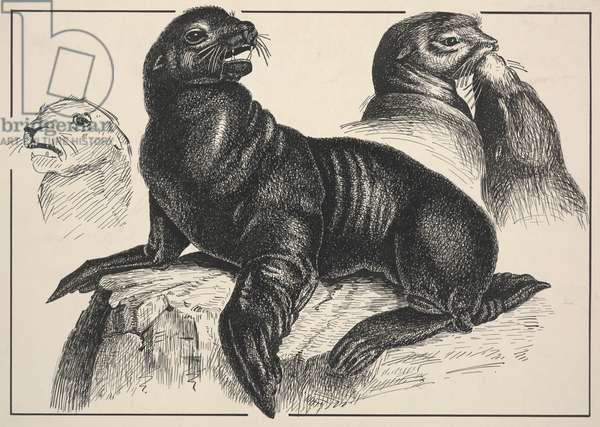 Seal (pen and ink)