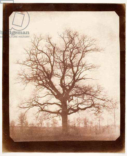 Oak Tree in Winter, early 1840s (salt type print from a calotype negative)