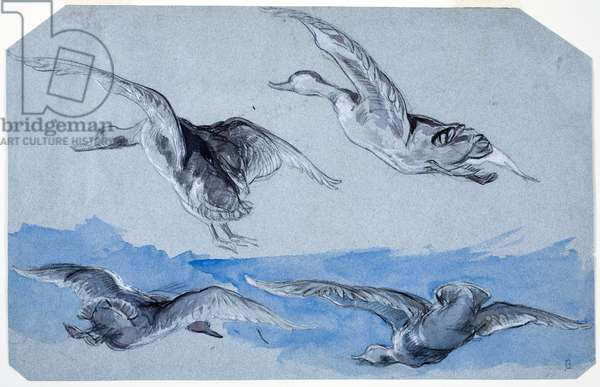 Flying Geese (black chalk, brush & w/c, highlighted with white gouache on paper)
