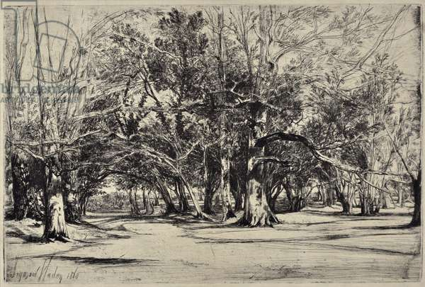 A By-road in Tipperary, 1860 (drypoint)