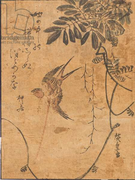 Study of bird in flight and plant, 19th century (woodblock print)