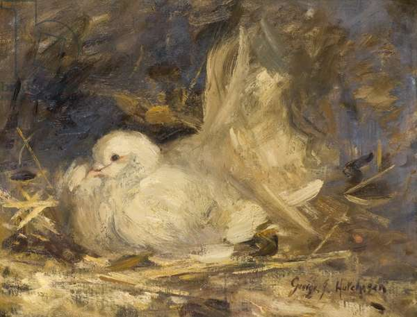 The Brooding Dove, 1914 (oil on canvas)