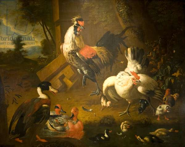 A Cock with a Hen and Three Ducks, 17th century (oil on canvas)