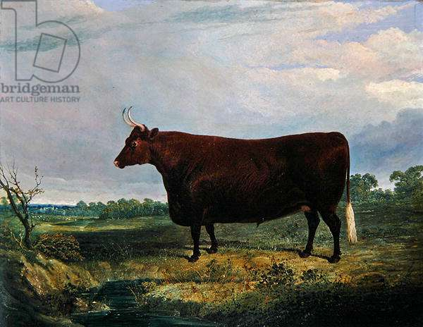 Portrait of a Brown Bull, 1831 (oil on canvas)