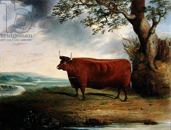 Portrait of a Brown Cow, 1844 (oil on canvas)