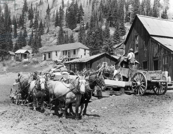 Six team wagons loaded with concentrate at Camp Bird mill, ready to leave for Ouray, c.1900-10 (b/w photo)
