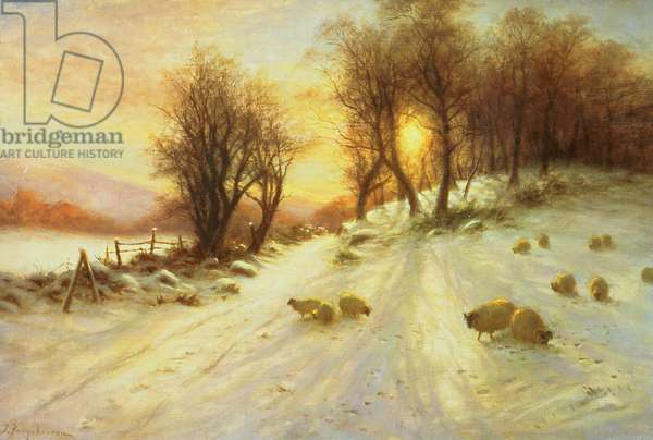 Sheep in Winter Snow (oil on canvas)