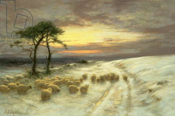 Sheep in the Snow (oil on canvas)