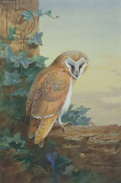 Barn Owl, 1916 (watercolour on paper)