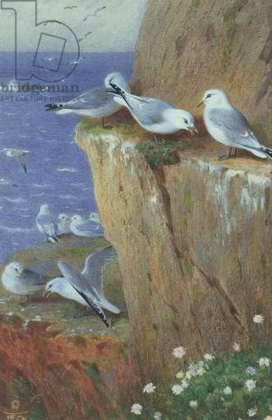 Seagulls (w/c on paper)