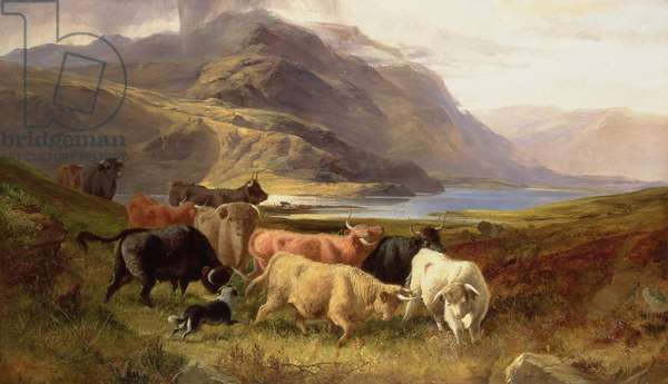 Highland Cattle with a Collie (oil on canvas)