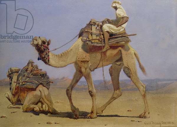 Camel Preparing to Lie Down, 1858 (w/c on paper)