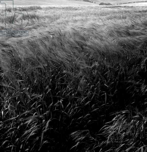 Fields, Aldworth, Berkshire 2, 1980 (b/w photo)