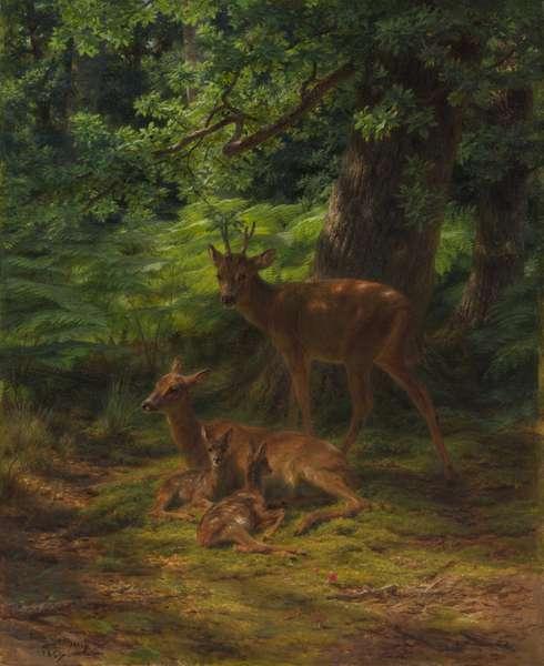Deer in Repose, 1867 (oil on canvas)