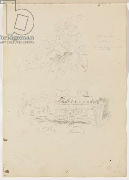 Plant in the Colosseum; Architectural Fragment, 1832 (graphite pencil on off-white wove paper)