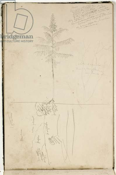 Untitled, sketch of Catskill landscape and study of Sumack tree, c.1832 (graphite pencil on off-white wove paper)