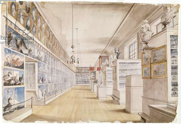 The Long Room, Interior of Front Room in Peale's Museum, 1822 (w/c over graphite on paper)