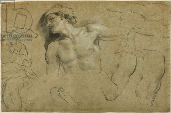 Studies of hands, shoulders and a leg (black chalk heightened with white on paper)