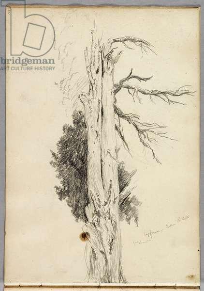 Cypress, Villa d'Este, 1832 (pencil on paper)