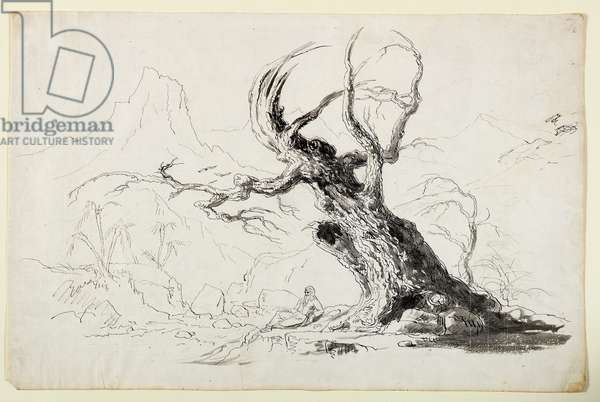 Large Gnarled Tree with Bearded Man Seated Below (pen & ink over pencil on paper)