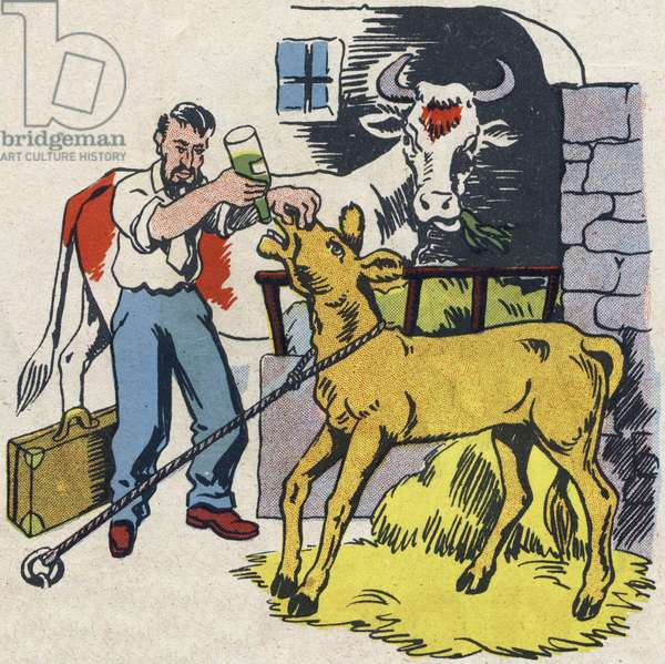 """The veterinarian heals the calf and the cow. Engraving in """""""" ABC des metiers"""""""""""". Agence Gutenberg editions, Lyon, 1945. Author and illustrator unknown. 24 pages. Dimensions: 27x19cm. Private Collection"""