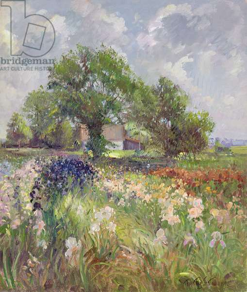 White Barn and Iris Field, 1992