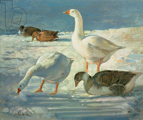 Geese and Mallards, 2000 (oil on canvas)