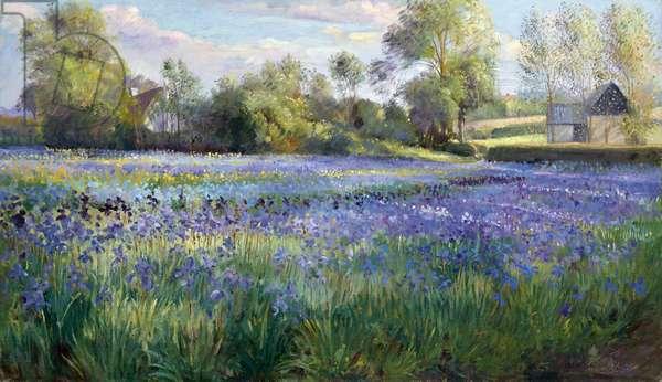 Dappled Light on the Iris Field, 1991