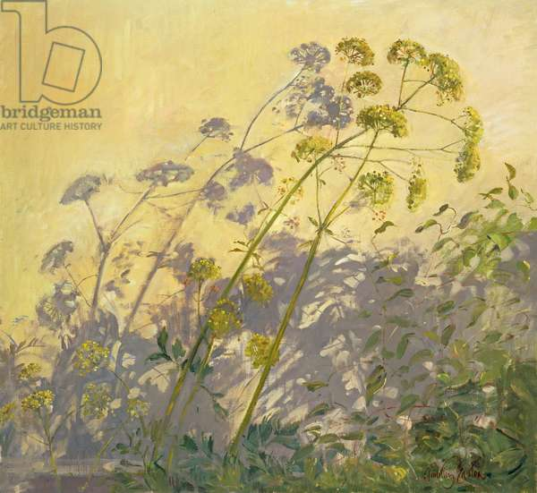 Lovage, Clematis and Shadows, 1999 (oil on canvas)