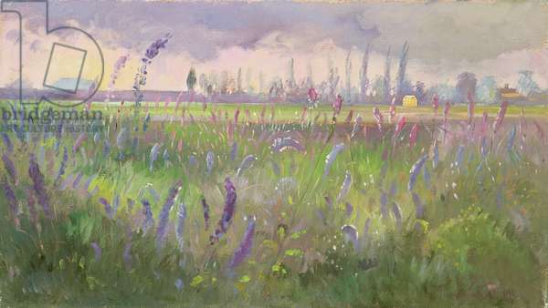 Delphiniums, Storm passing, 1991