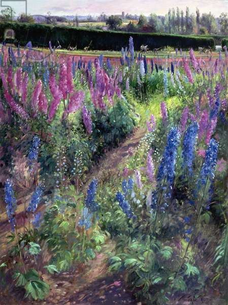 Delphinium Field and Hoers, 1991