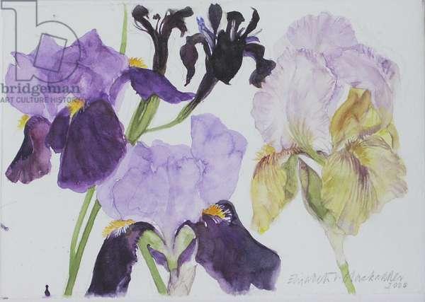 Four Irises, 2004 (w/c on paper)