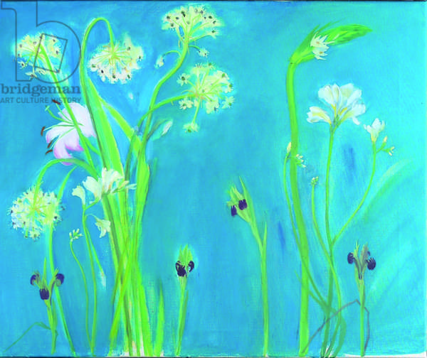 Irises and Chincherinchee (oil on canvas)