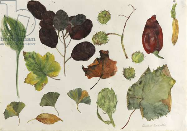 Leaves and Pepper (w/c on paper)
