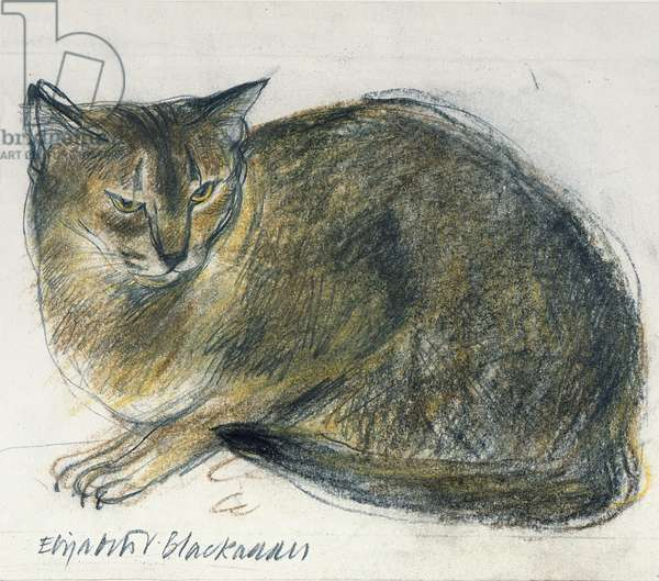 Abyssinian Cat 'Rosie' (pastel on paper)