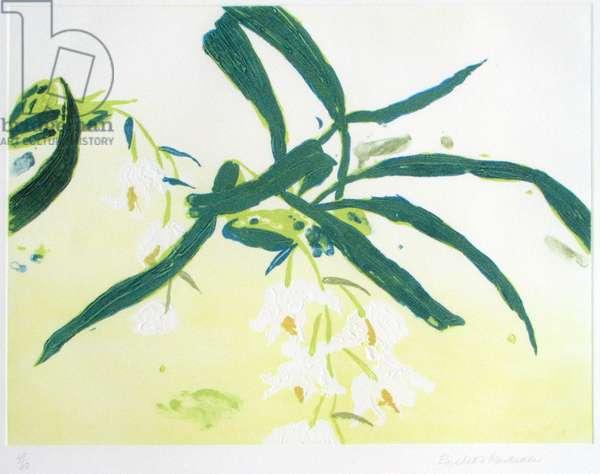 Orchidacea Coelogyne Cristata (carborundum print)