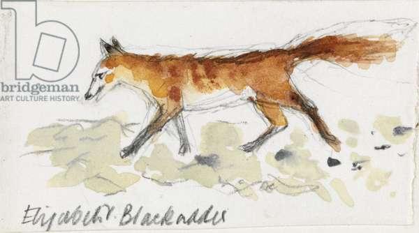 Fox (pencil & w/c on paper)