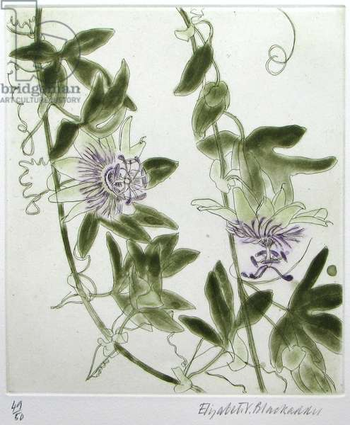 Passion Flower (coloured etching & aquatint)