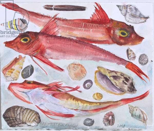 Gurnard and Shells (w/c on paper)